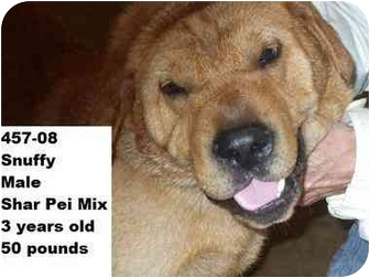 Shar Pei Mix Dog for adoption in Zanesville, Ohio - Snuffy - RESCUED!