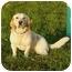 Photo 3 - Basset Hound Mix Dog for adoption in Austin, Minnesota - Tassel