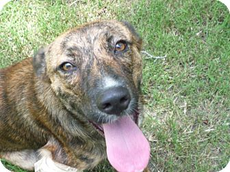 Catahoula Leopard Dog Mix Dog for adoption in Pointblank, Texas - Annie
