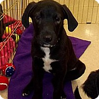 Adopt A Pet :: Tommy - Silsbee, TX