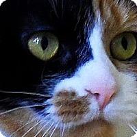Adopt A Pet :: Jewel - Spencer, NY