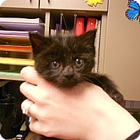 Adopt A Pet :: Penelope - Maywood, NJ
