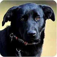 Adopt A Pet :: HANNAH - Wakefield, RI