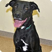 Adopt A Pet :: Rex - Port Washington, NY