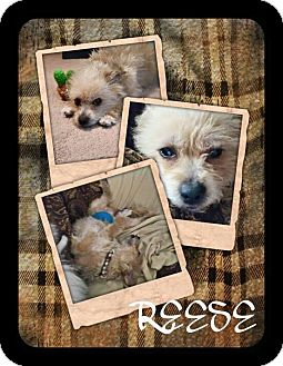 Terrier (Unknown Type, Medium) Mix Dog for adoption in ROME, New York - Reese