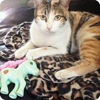 Adopt A Pet :: Tita - San Diego, CA