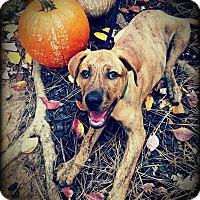 Adopt A Pet :: Delilah B - Alpharetta, GA
