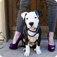 Adopt A Pet :: Rudy - Mission Viejo, CA