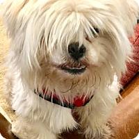 Adopt A Pet :: Bryce-ADOPTION PENDING - Boulder, CO