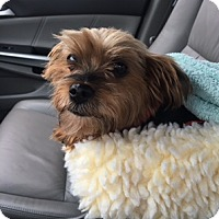 Adopt A Pet :: Dawn - N. Babylon, NY