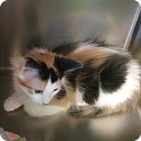 Adopt A Pet :: Frezia - Chippewa Falls, WI