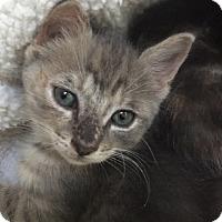 Adopt A Pet :: Tater - Piscataway, NJ