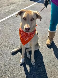 Mixed Breed (Large) Mix Dog for adoption in Myrtle Beach, South Carolina - MurBo