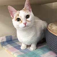 Adopt A Pet :: Cloe - Plainville, CT