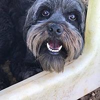 Adopt A Pet :: Aria - Russellville, KY
