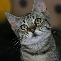 Adopt A Pet :: Zena - Canoga Park, CA