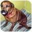 Photo 4 - Labrador Retriever/Rottweiler Mix Dog for adoption in Guelph, Ontario - Josie