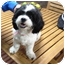 Photo 2 - Shih Tzu Mix Dog for adoption in Miami, Florida - Sherri