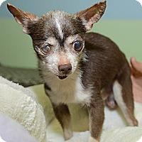 Adopt A Pet :: Indiana - New York, NY