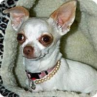 Adopt A Pet :: Minnie - Cheyenne, WY