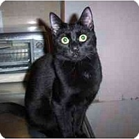 Adopt A Pet :: LuLu/Lucy - Vails Gate, NY