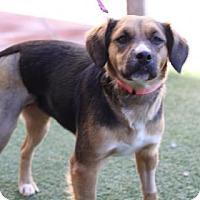 Adopt A Pet :: Maggie Mia - Phoenix, AZ