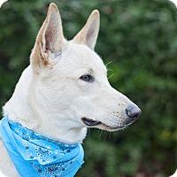 Adopt A Pet :: Ike - Kingwood, TX