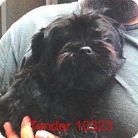 Adopt A Pet :: Tender - Greencastle, NC