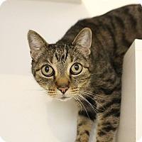 Adopt A Pet :: Solo - Colorado Springs, CO
