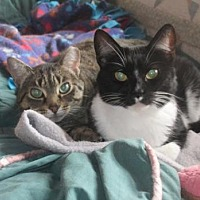 Adopt A Pet :: Sweet Pea and Birdie - St. Paul, MN