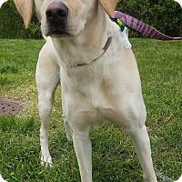 Adopt A Pet :: Sparkle 2-Adopted! - Detroit, MI
