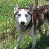 Adopt A Pet :: Pedro - Winfield, KS