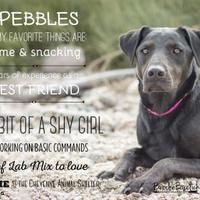 Adopt A Pet :: Pebbles - Cheyenne, WY
