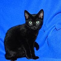 Adopt A Pet :: Dolly - Buford, GA