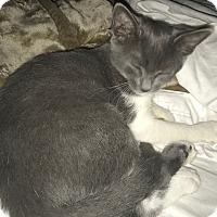 Adopt A Pet :: Samara - Pearland, TX