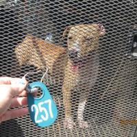 Adopt A Pet :: 36580148 - West Monroe, LA