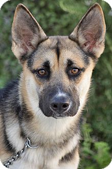 German Shepherd Dog Mix Dog for adoption in Los Angeles, California - Zelda von Zeven