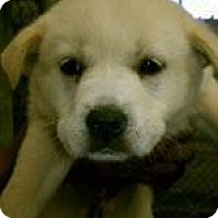 Adopt A Pet :: Blake - Rocky Mount, NC