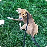 Adopt A Pet :: INDY - Grafton, OH