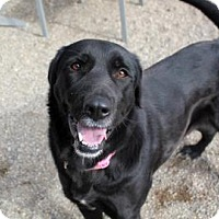 Adopt A Pet :: Addie - Medora, IN