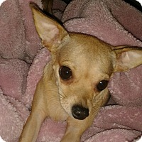 Adopt A Pet :: Priscilla - Orange, CA