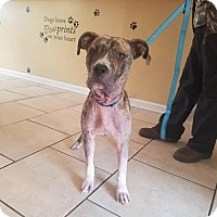 Adopt A Pet :: Jesse: Tennessee, will transport - Fulton, MO