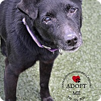 Adopt A Pet :: Sylvie - Youngwood, PA