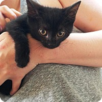 Adopt A Pet :: twitch and elsa - Centreville, VA