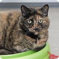 Adopt A Pet :: Sombra - New Castle, DE