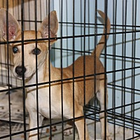 Adopt A Pet :: Mario - Philadelphia, PA