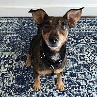 Adopt A Pet :: Minnie! - New York, NY