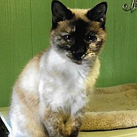 Adopt A Pet :: Carly - Medway, MA