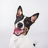 Adopt A Pet :: Love-me - Decatur, GA