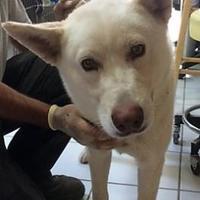 Adopt A Pet :: Diego - Rio Rancho, NM